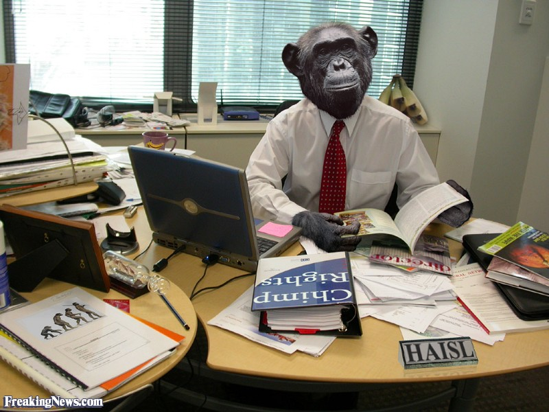 chimp-in-the-office-28983