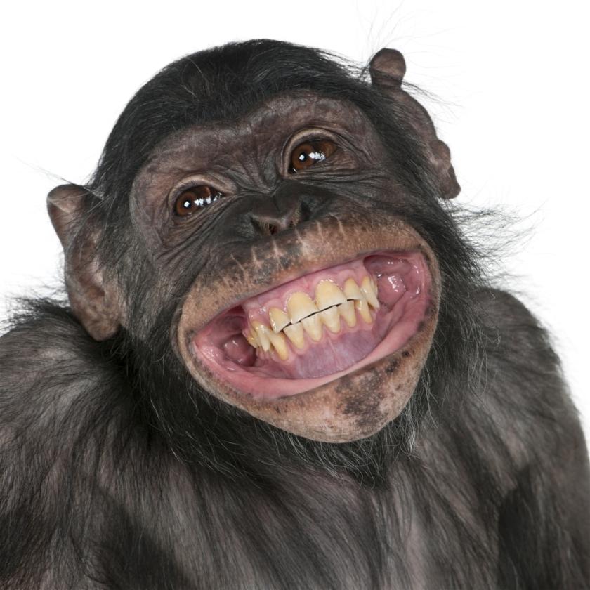 mono-riendo